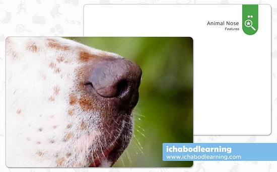 ABA Cards - Features - Animal Nose