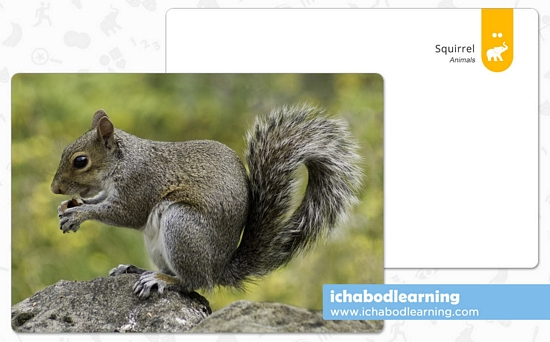 ABA Cards - Animals - Squirrel